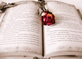 a rose lies on an open book
