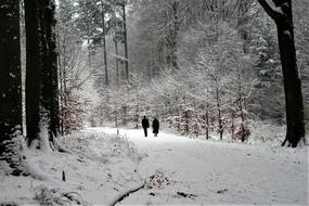elderly couple walks in the winter forest
