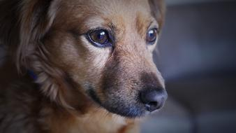 photo of a sad brown dog