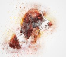 drawn watercolor spaniel on a white background