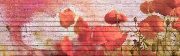 red poppies painted on a wooden wall