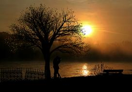 couple in love stands under a tree at sunset