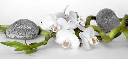 Orchid Flower and stone love and dream