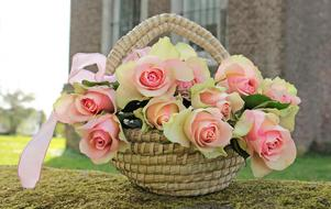 beautiful fresh Roses in Basket outdoor