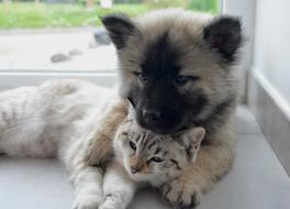friendship of puppy and kitten