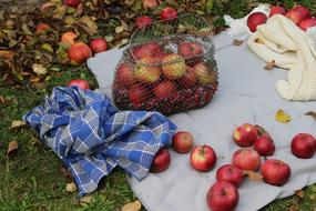 harvest of red apples in a wicker basket in the garden