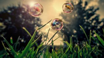 photo of soap bubbles over grass