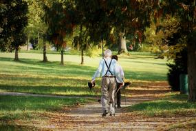 the elderly are doing Nordic walking in the park