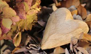 Heart Wood dry leaves