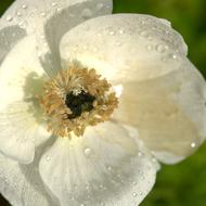 white Flower with dew drops, top view