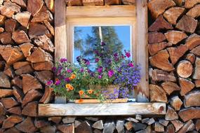 potted flowers on a wooden window among stacked firewood