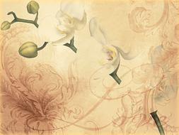 vintage floral background with orchid