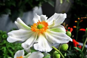 goodly Beauty White flower