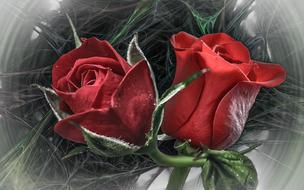 two red Roses, digital art
