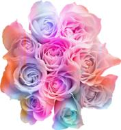 rainbow bouquet of roses on a white background