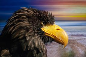 digital image of a profile of a white-tailed eagle on the seashore