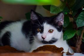 photo of a black and white cat on a background of a green potted plant