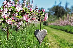 wooden heart in the orchard