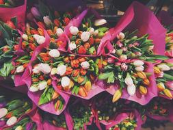 colors Tulips Bouquet
