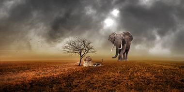 image of dead and living elephants in the desert against a stormy sky