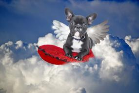 image of french bulldog with wings in the sky