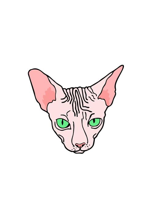 angry face of sphinx cat, drawing