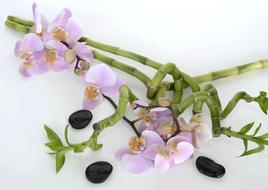 Orchid Flower and Bamboo Luck and black stone