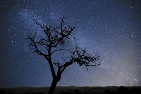 Tree Stars Milkyway dark