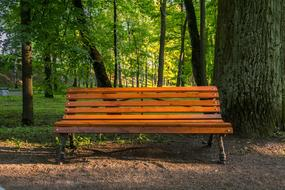 empty wooden Bench in Park at Evening