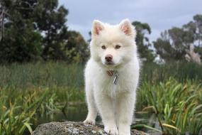 Nature Dog Cute white