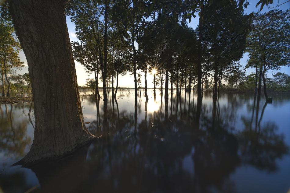 trees are reflected in the water at dusk