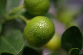 macro photo of green lemons