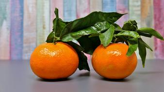 two tangerines with green leaves