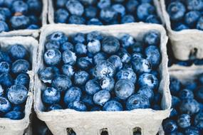 ripe blueberries in cardboard boxes