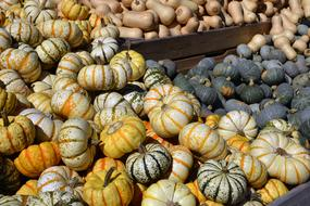 many Pumpkin Gourd Vegetables