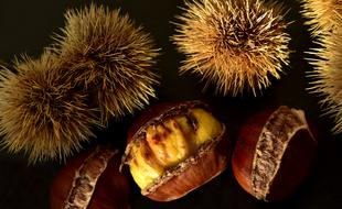 prickly and peeled chestnut