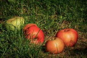 red and green Apples on grass