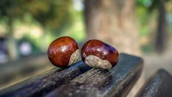 Chestnuts Fruits