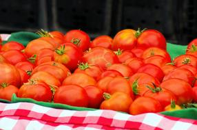 fresh organic grown tomatoes