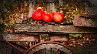 bright red pumpkins on a cart on the island of Hokkaido