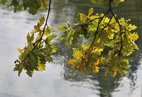 Sprig Yellow Foliage and river