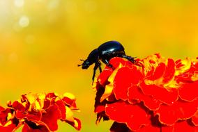 Forest Beetle red flowers