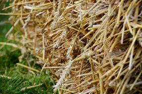 pile of straw close up
