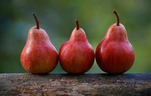 Pears Red Branch