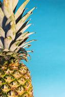 ripe pineapple on a background of blue sky