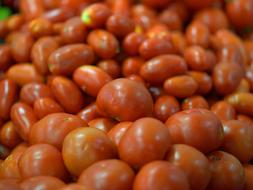 Fresh biological tomatoes in a super market