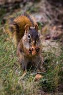 squirrel gnaws a nut at the forest edge