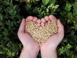 Heart Hands seeds