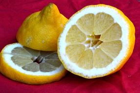 photo of sliced lemon on a burgundy background