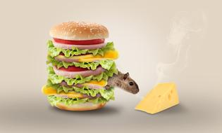mouse smelling cheese behind hamburger